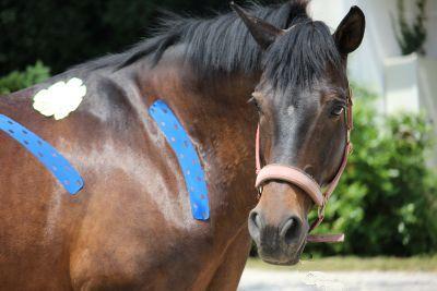 Durch Berufsausbildung am Pferd zum Wunschberuf