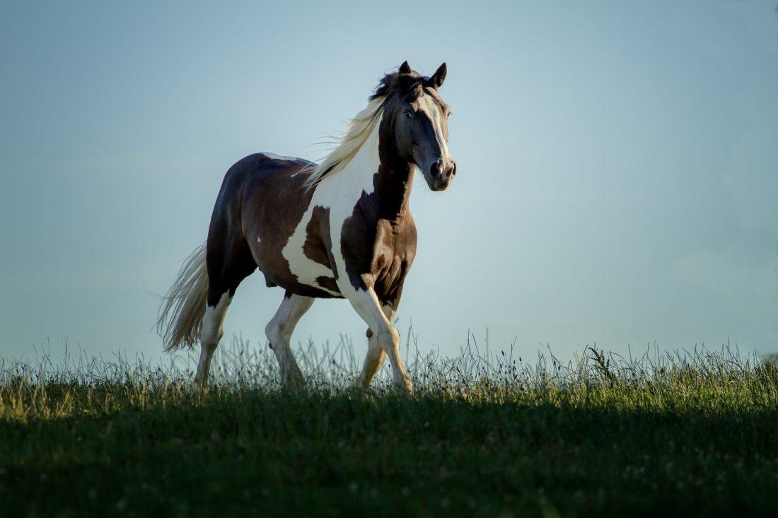Ausbildung, Pferd, Therapie, Therapeut, Equipathie, Physiotherapie, Osteopathie, Psychomotorik, Meridianmassage, TCM, Akupressur, College Caball, Ernährungsberatung, Faszienbehandlung