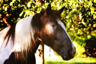 Pferd, Ausbildung, Bayern