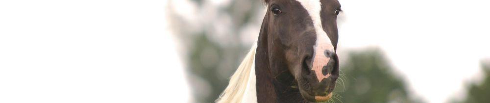 Dienstleistung Osteopathie, Physiotherapie, Ernährungsberatung, Energetische Therapie für Pferde