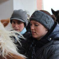 Osteopathie Ausbildung am Pferd in Bayern