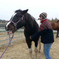 College Caball: Ausbildung zum Energetischen Therapeuten für Pferde am College Caball, Bildungsstätte für alternative Therapien am Pferd. TCM, Meridianmassage, Akupressur, energetische Behandlung in Bayern