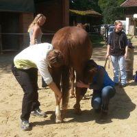 Osteopathiekurs Pferd