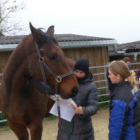Erklärungen am Pferd, Ausbildung zum Energetischen Therapeuten für Pferde am College Caball, Bildungsstätte für alternative Therapien am Pferd. TCM, Meridianmassage, Akupressur, energetische Behandlung in Bayern