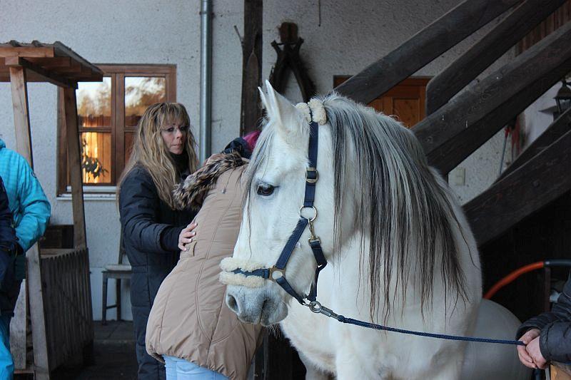 Osteopathie für Pferde, Ausbildung
