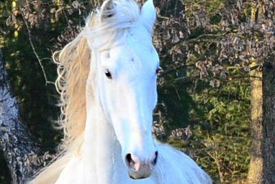Ausbildung Osteopathie am Pferd