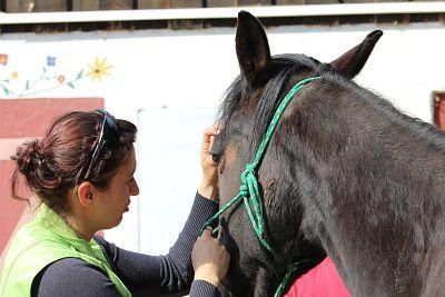 Ernährungs-Therapeut für Pferde, Ausbildung, Thomas Kranz
