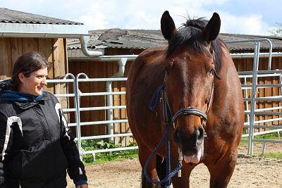 Ausbildung Pferdetherapeut, hier Energetischer Therapeut