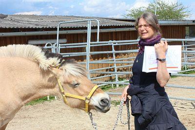 Ausbildung Energetischer Therapeut für Pferde, TCM Pferd, Meridianbehandlung Pferd, APM Pferd, Ausgleich von Energien