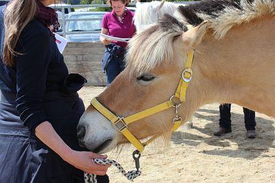 Ausbildung Tierheilpraktiker für Pferde