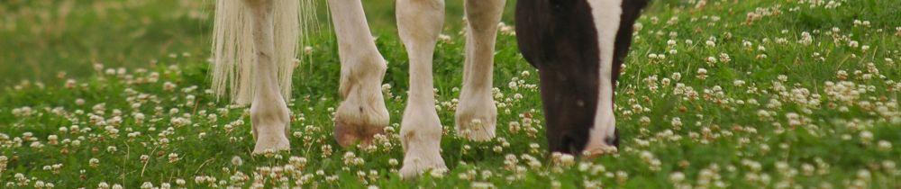 Ernährungsberater Pferd