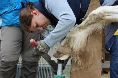 Ausbildung Pferdetherapeut