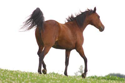 Die Ausbildung Pferdetherapeut zeigt Wege zum vitalen Pferd