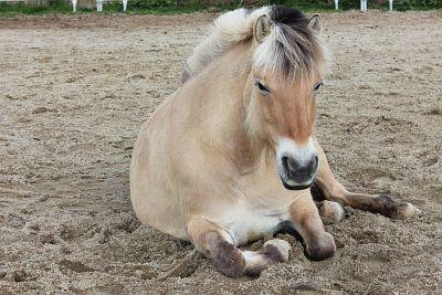 Energetischer Therapeut für Pferde