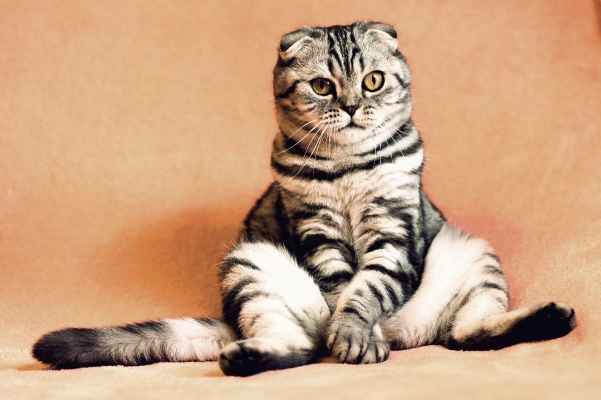 Katze sitzt